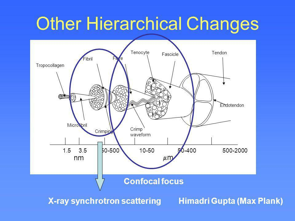 Other Hierarchical Changes