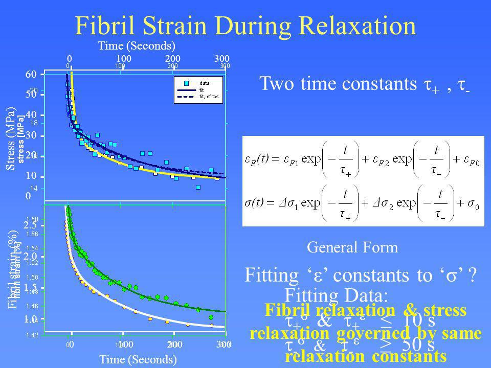Fibril Strain During Relaxation