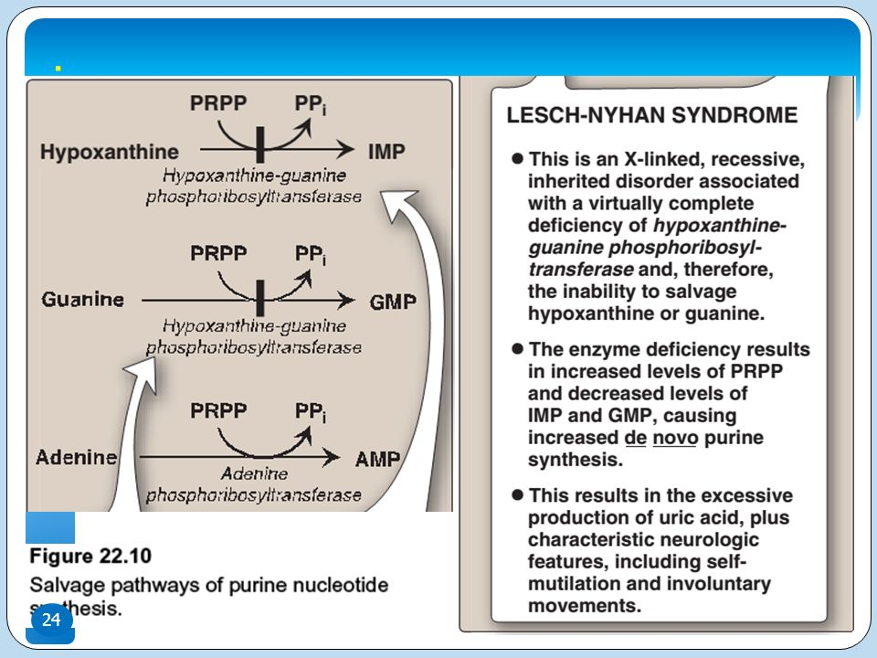 Uric Acid Pathway Nucleotide Metabolism ...
