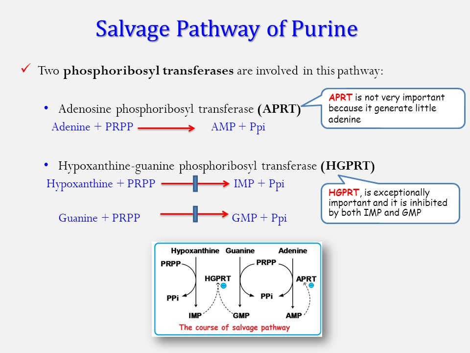nucleotide metabolism biosynthesis ppt video online