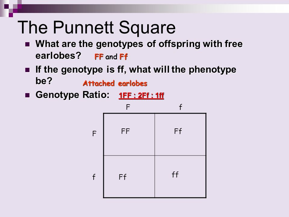 Probability and Punnett Squares - ppt video online download