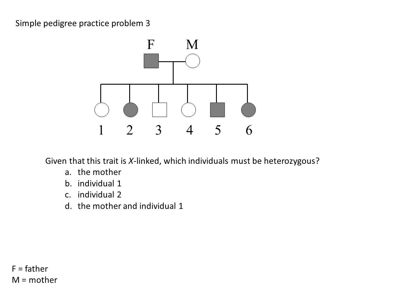 worksheet Genetics Practice Problems Simple Worksheet all grade worksheets genetics practice problems worksheet answers pedigree analysis through genetic hypothesis testing