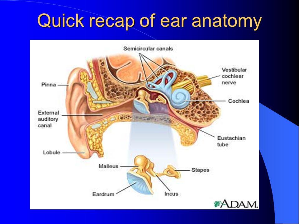 Quick recap of ear anatomy