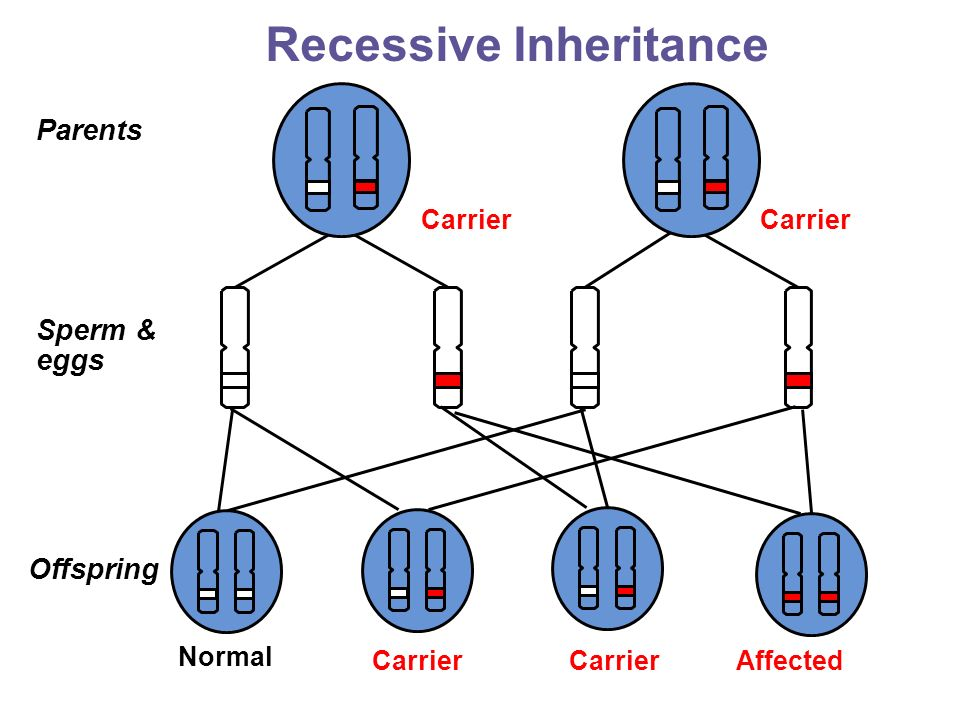 how to tell if inheritance is recessive