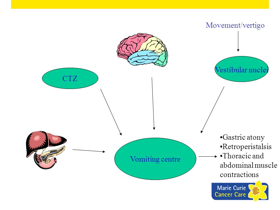 Movement/vertigo Vestibular nuclei. CTZ. Gastric atony. Retroperistalsis. Thoracic and abdominal muscle contractions.