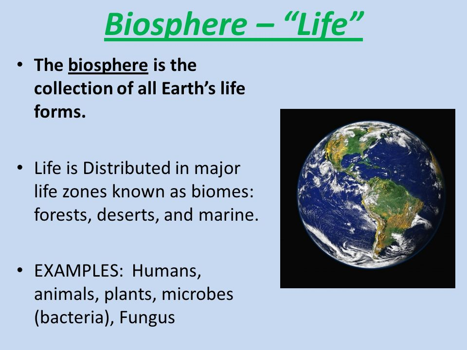 Biosphere – Life The biosphere is the collection of all Earth's life forms.