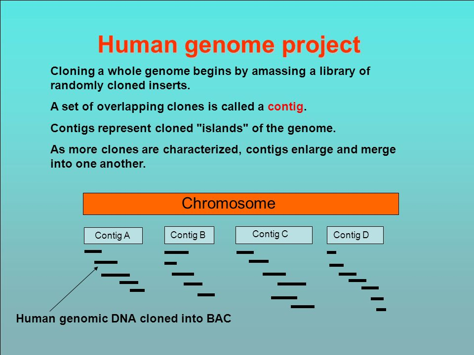 Human genome project Chromosome