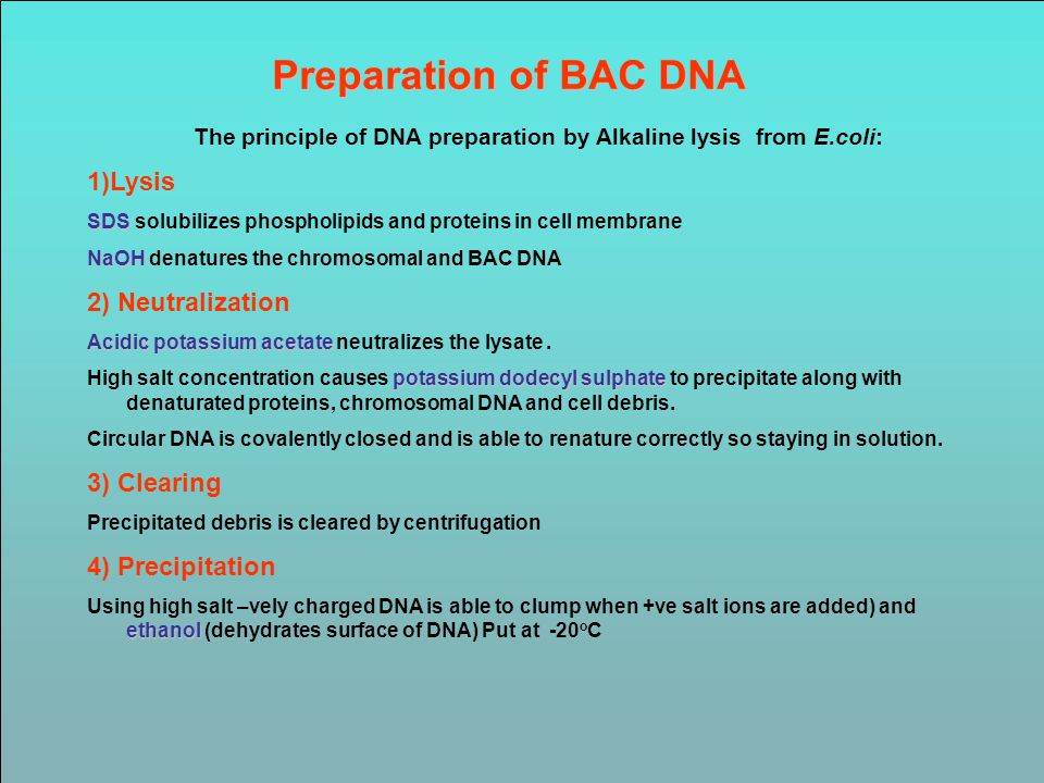 The principle of DNA preparation by Alkaline lysis from E.coli: