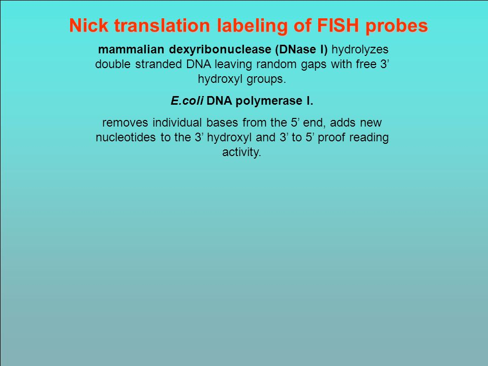 Nick translation labeling of FISH probes