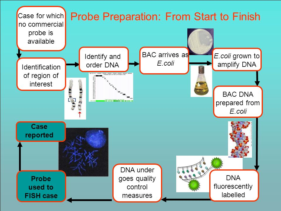 Probe Preparation: From Start to Finish