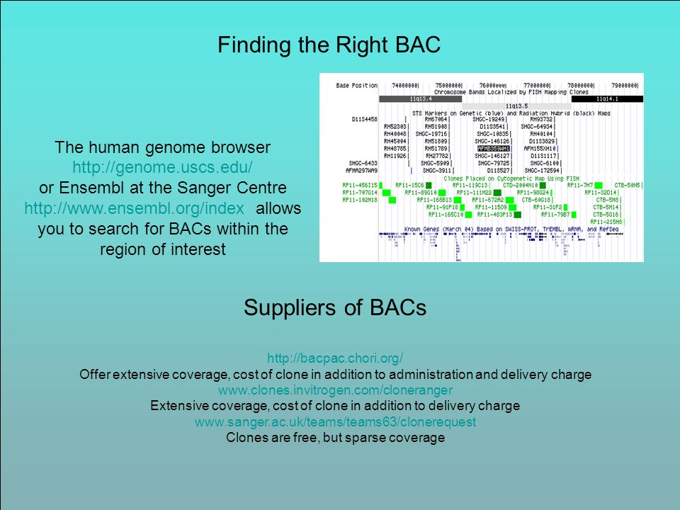 Finding the Right BAC Suppliers of BACs
