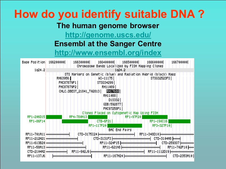 How do you identify suitable DNA