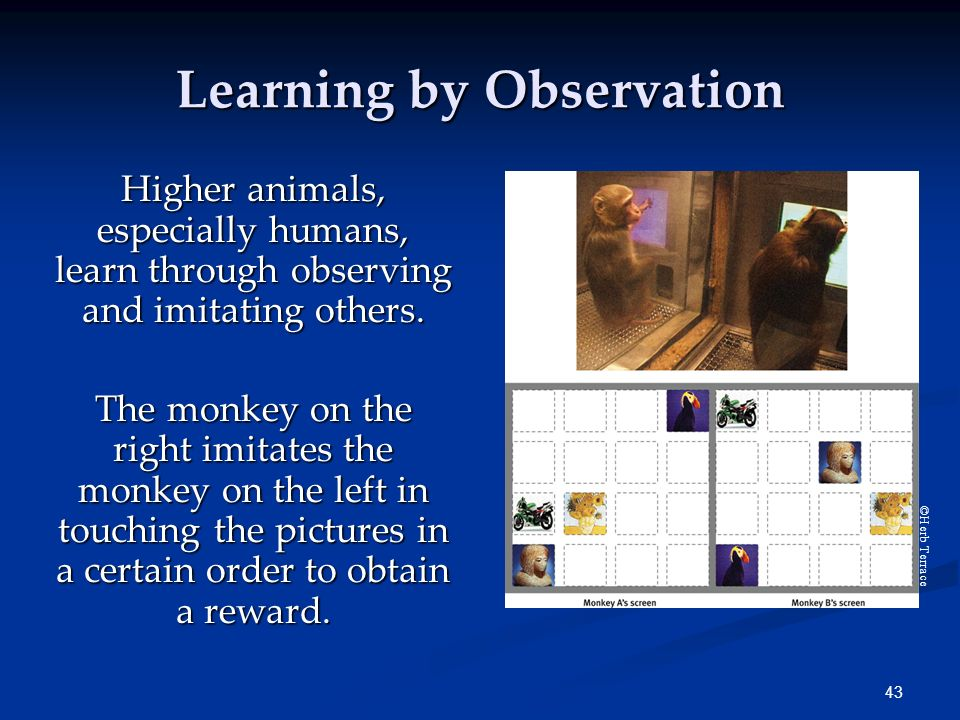 Individuals learn even more through observing how others ...