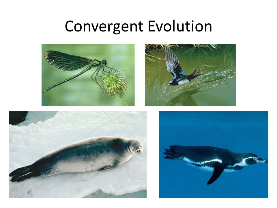 Whales Dolphins And Porpoises Ppt Video Online Download