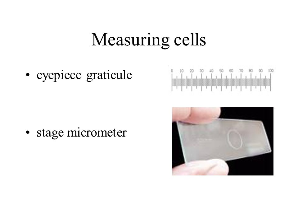 Measuring cells eyepiece graticule stage micrometer