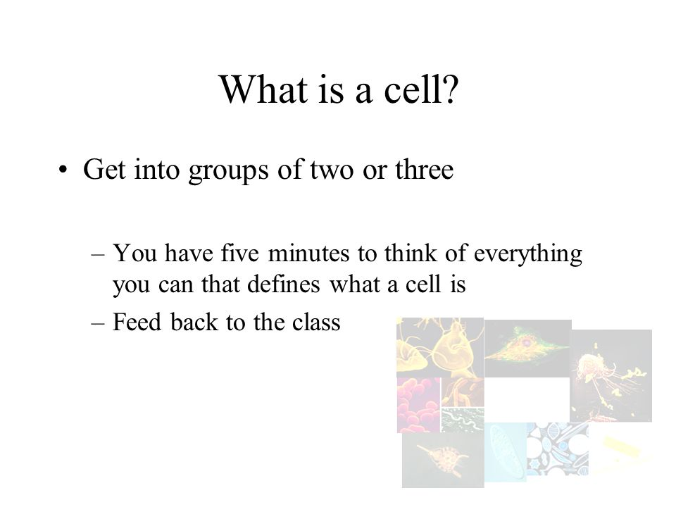What is a cell Get into groups of two or three