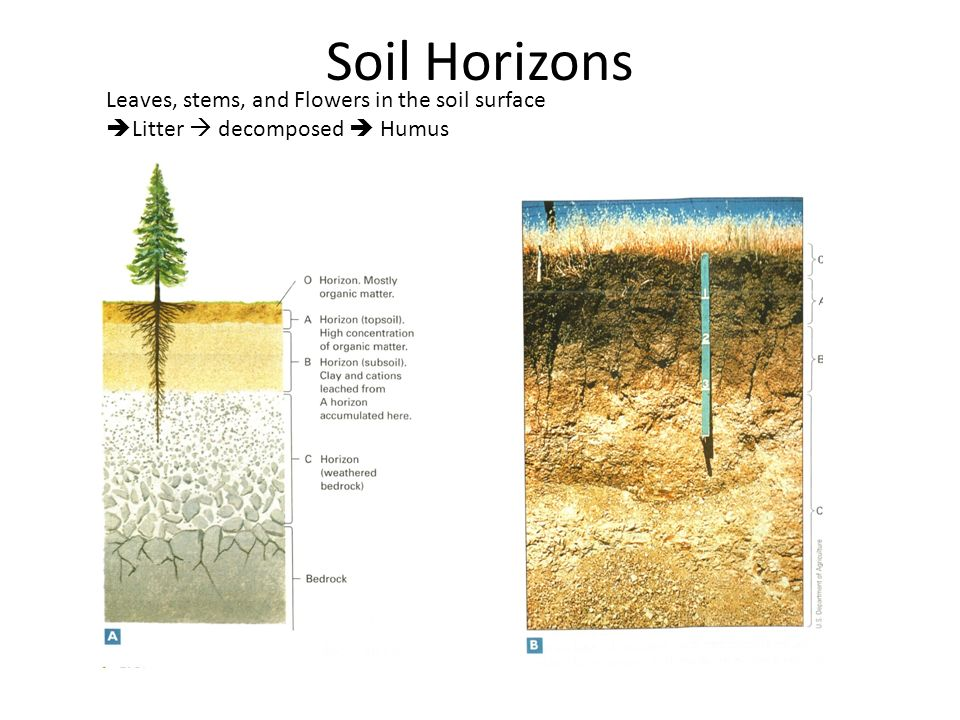 Weathering soil erosion ppt video online download for Soil horizons