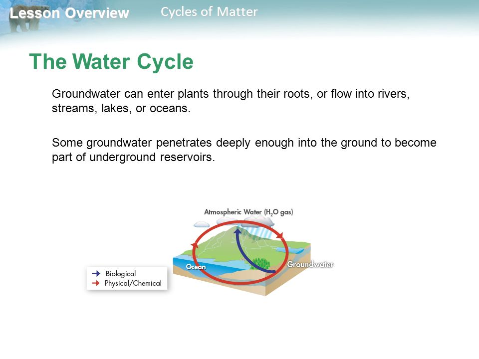 The Water Cycle Groundwater can enter plants through their roots, or flow into rivers, streams, lakes, or oceans.
