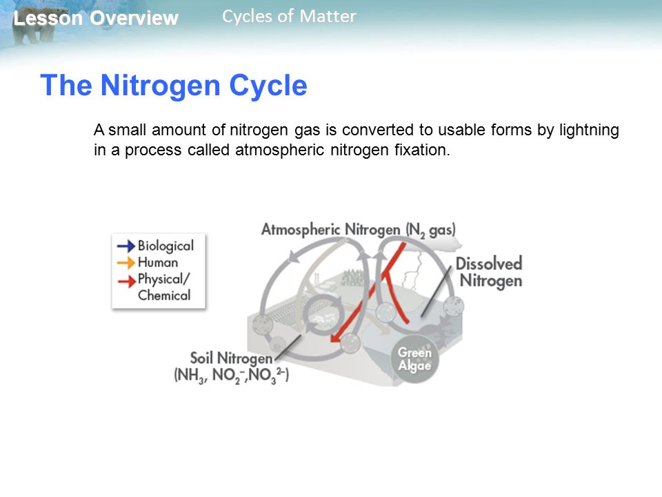 The Nitrogen Cycle A small amount of nitrogen gas is converted to usable forms by lightning in a process called atmospheric nitrogen fixation.