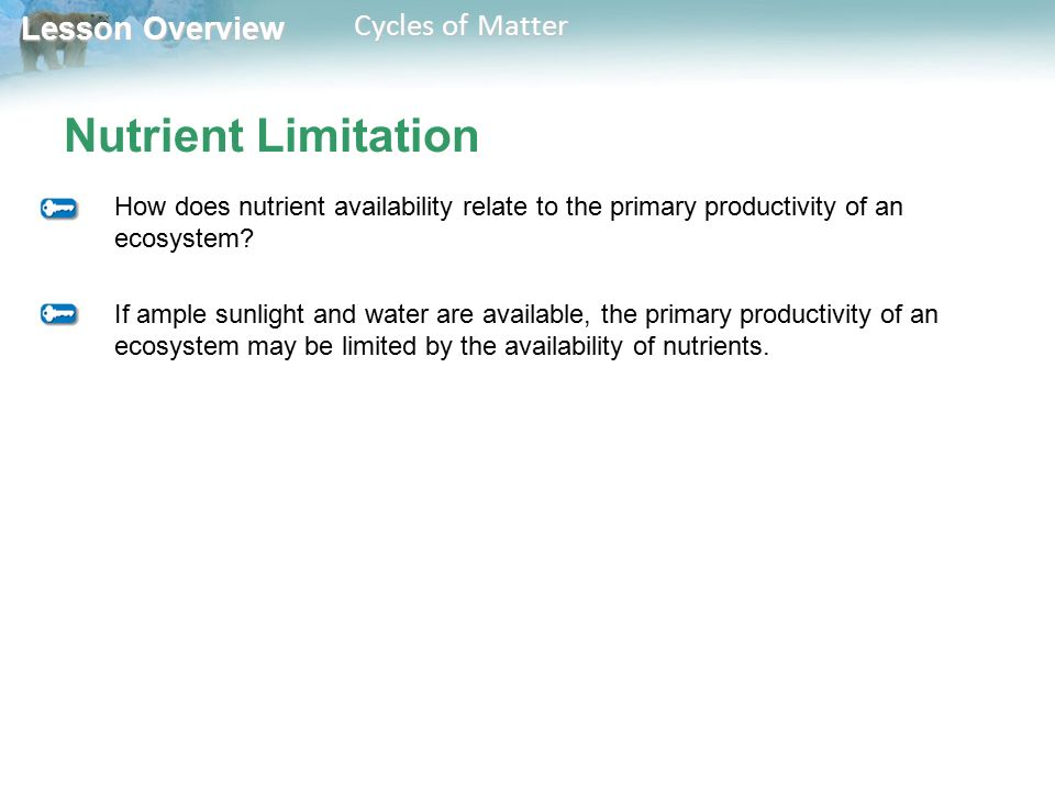 Nutrient Limitation How does nutrient availability relate to the primary productivity of an ecosystem