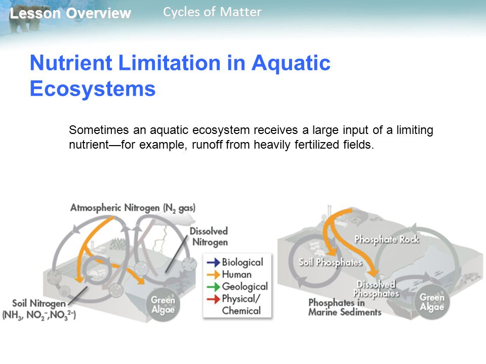Nutrient Limitation in Aquatic Ecosystems