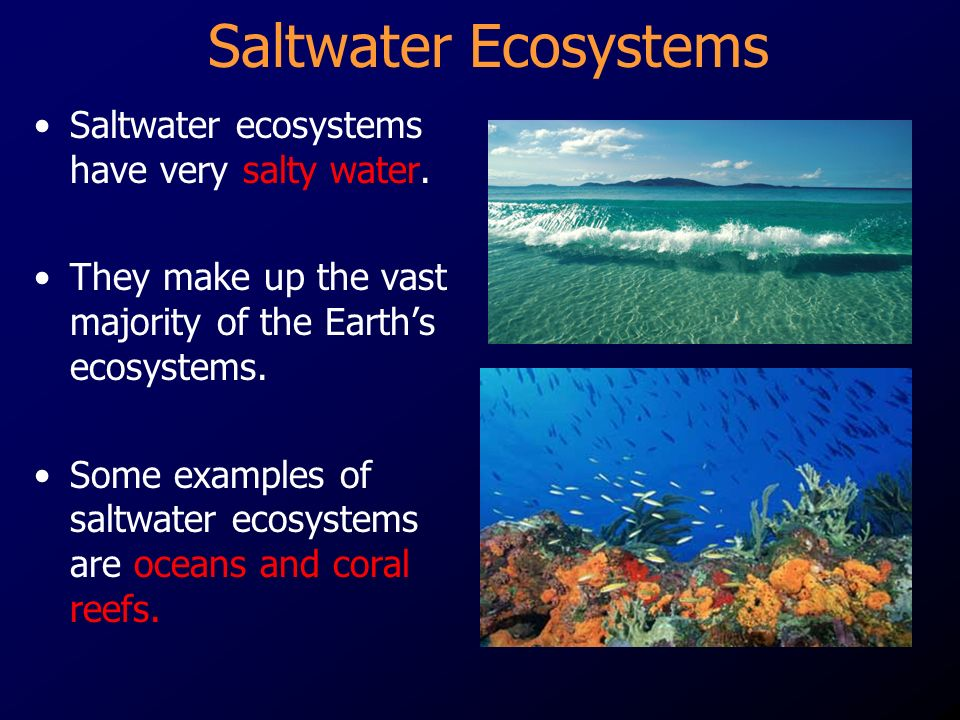 Saltwater Ecosystems Saltwater ecosystems have very salty water.