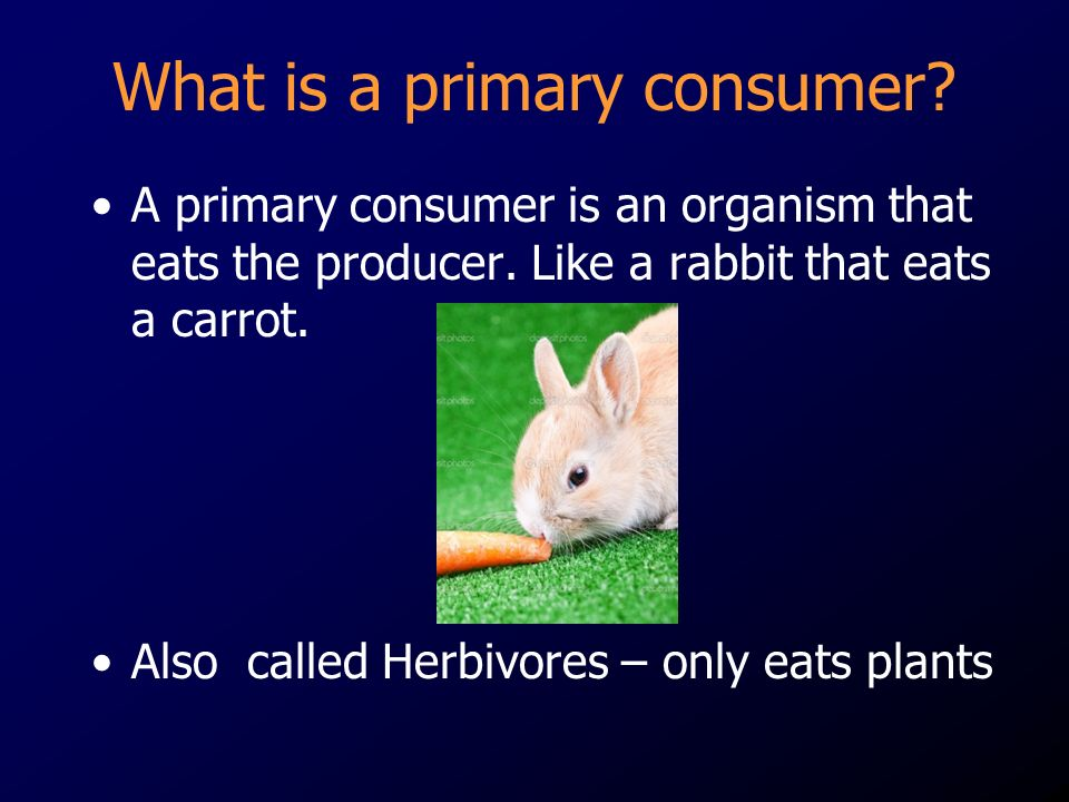 What is a primary consumer