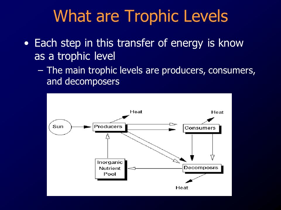 What are Trophic Levels