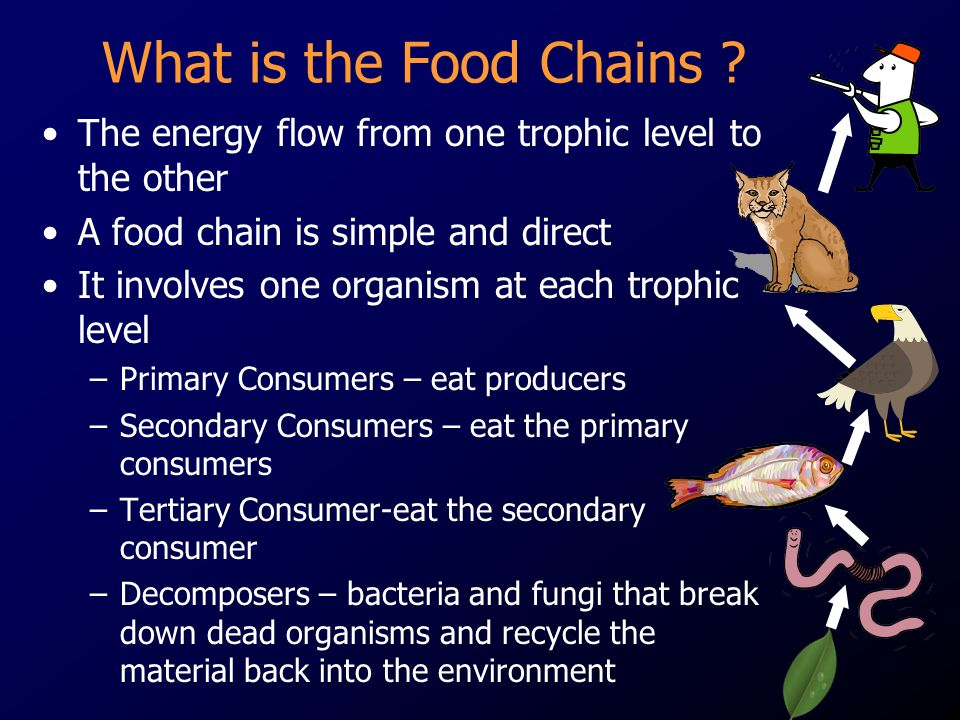 What is the Food Chains The energy flow from one trophic level to the other. A food chain is simple and direct.