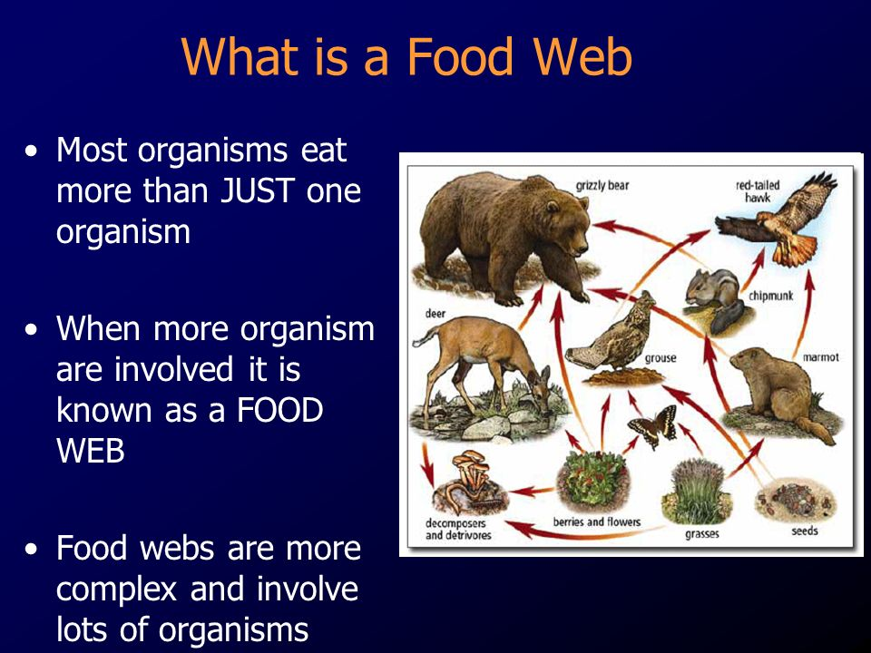 What is a Food Web Most organisms eat more than JUST one organism