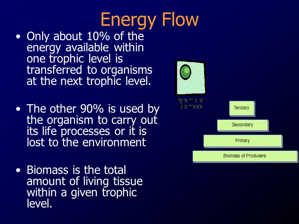 Energy Flow Only about 10% of the energy available within one trophic level is transferred to organisms at the next trophic level.