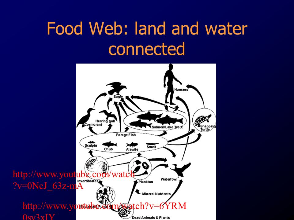 Food Web: land and water connected