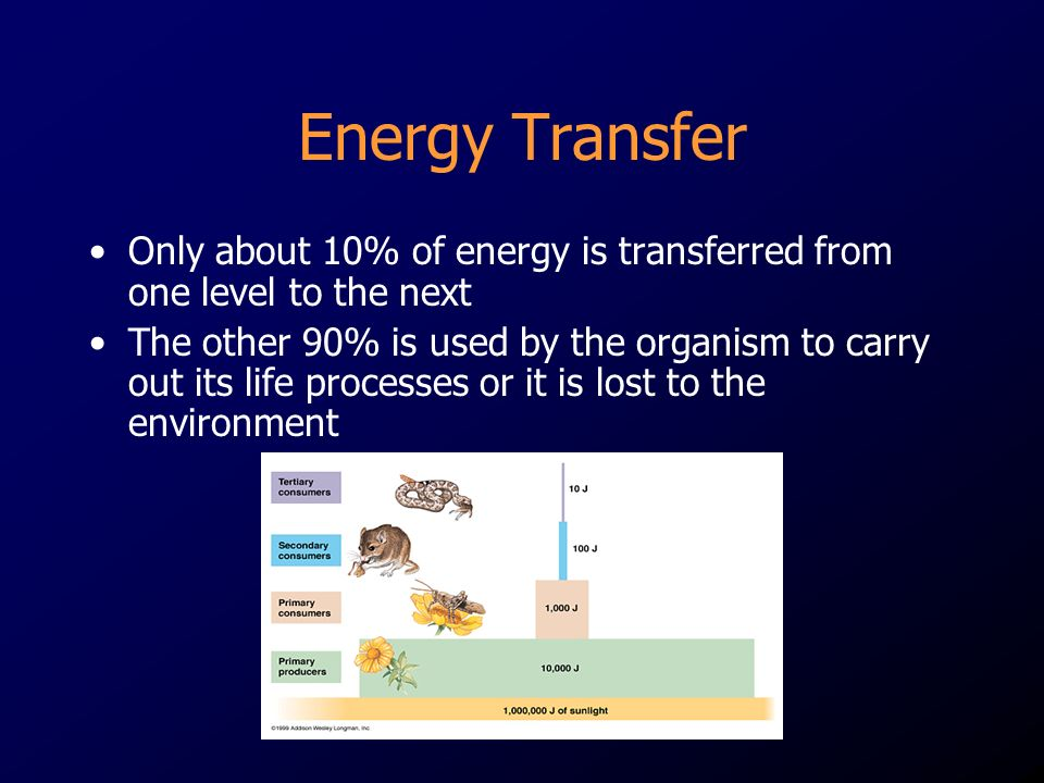 Energy Transfer Only about 10% of energy is transferred from one level to the next.