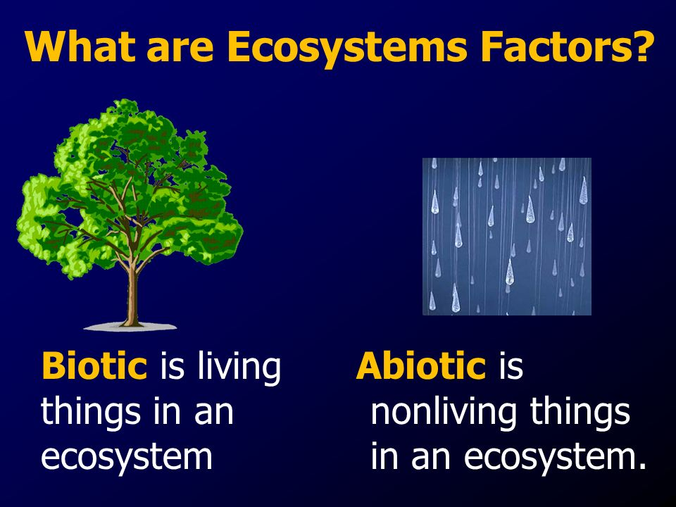 Biotic is living things in an ecosystem