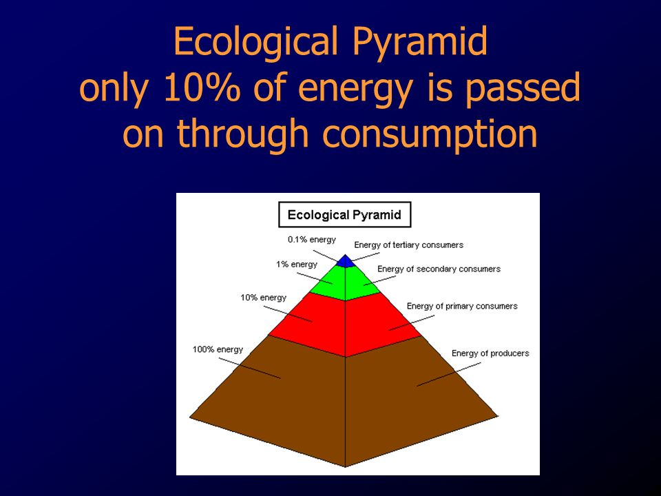 Ecological Pyramid only 10% of energy is passed on through consumption