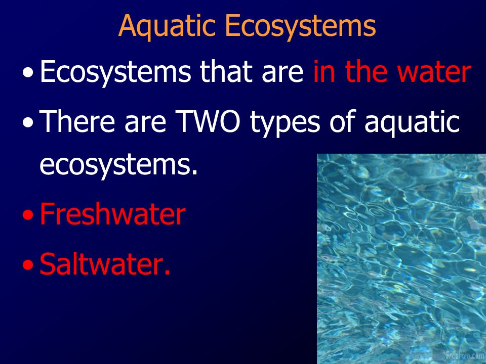 Ecosystems that are in the water