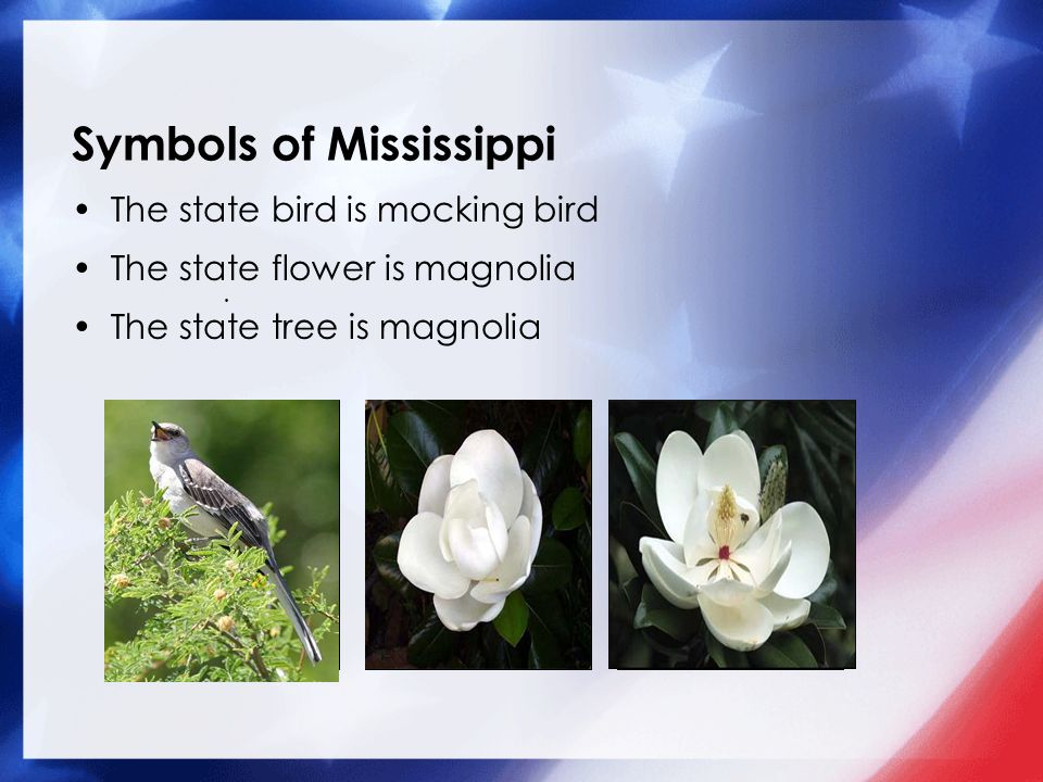 Our 50 States Mississippi