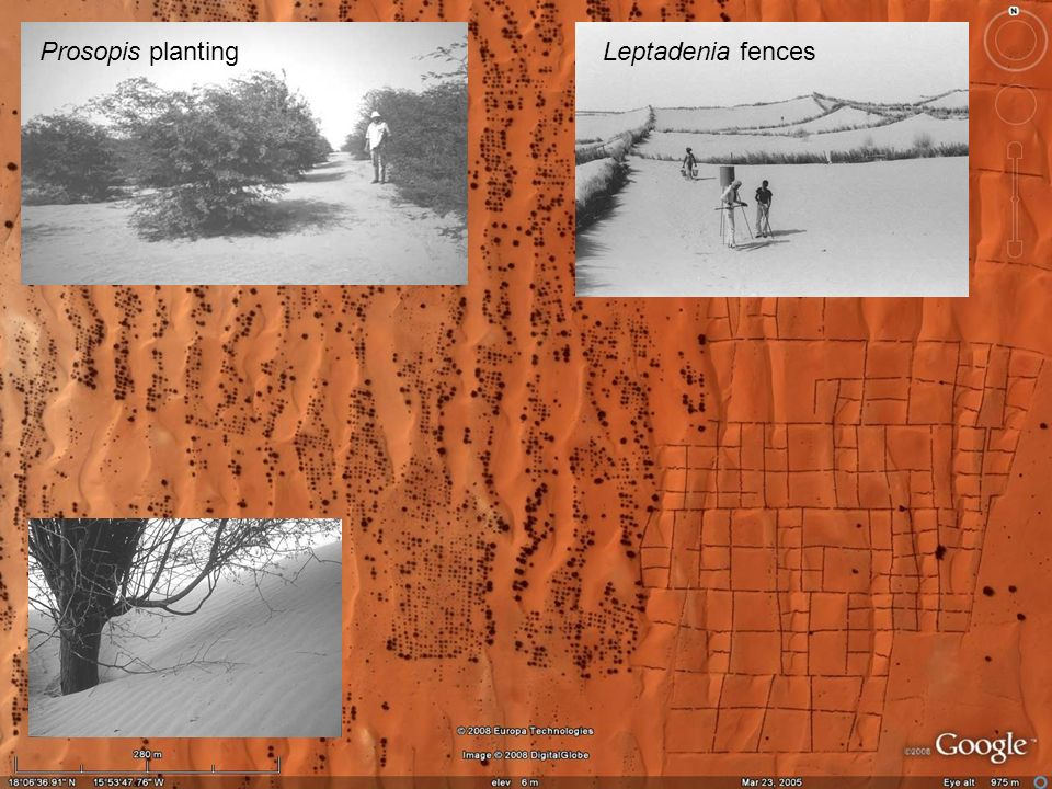 Prosopis planting Leptadenia fences