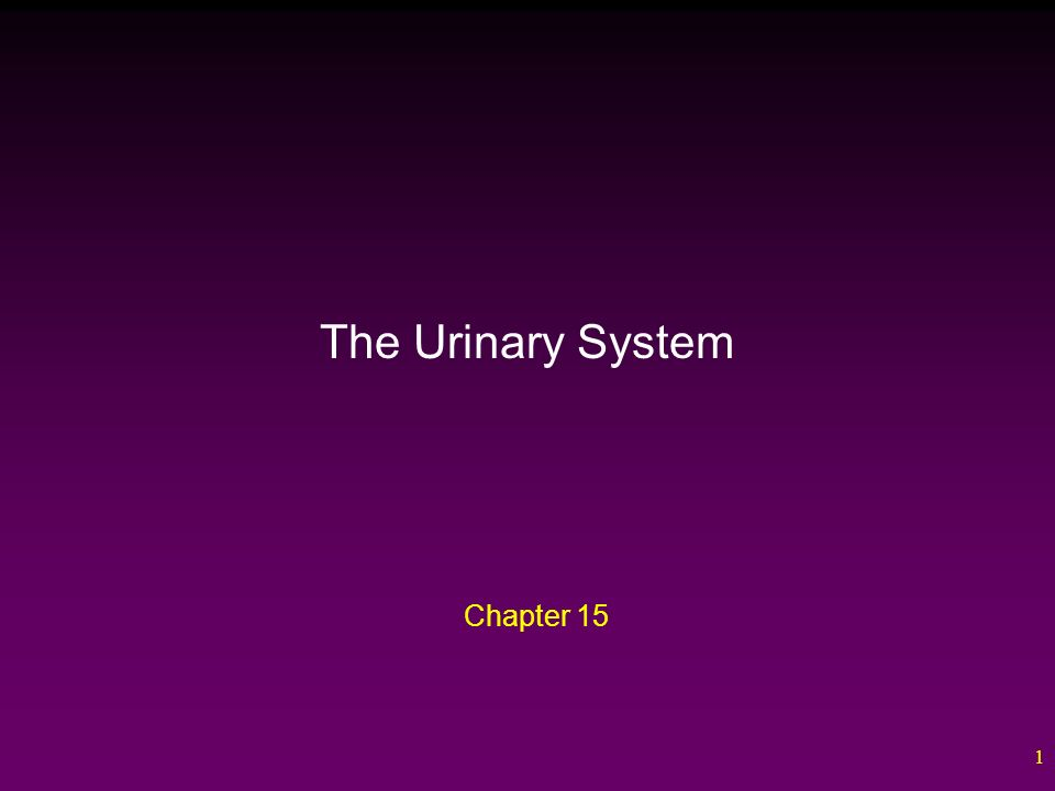 Images of Chapter 15 The Urinary System - #rock-cafe