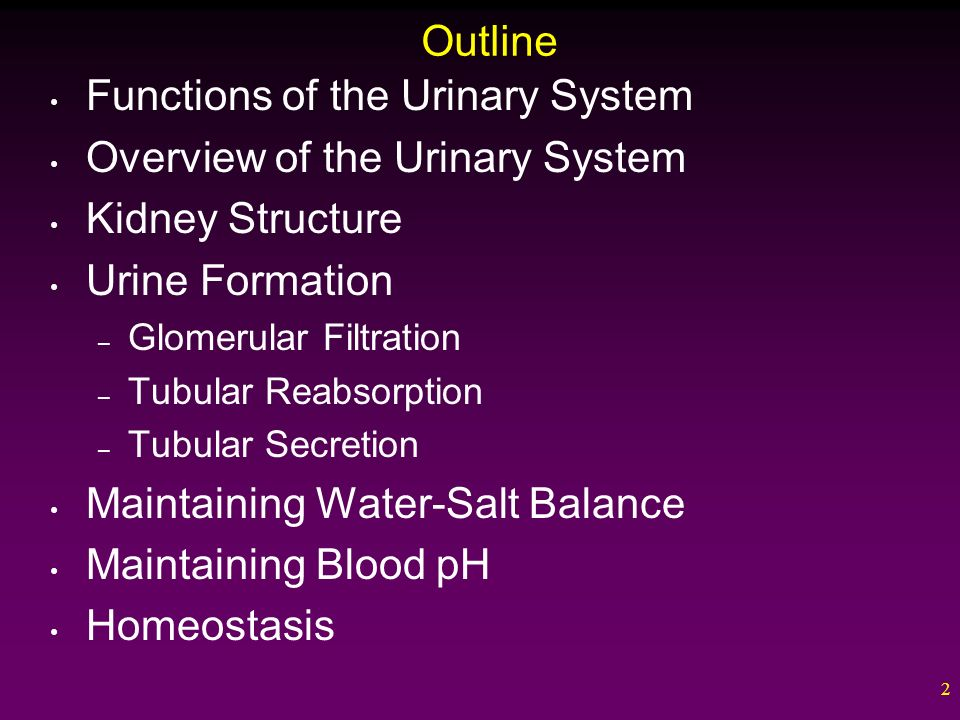 urinary system outline Start studying anatomy and physiology chapter 24: urinary system study outline learn vocabulary, terms, and more with flashcards, games, and other study tools.