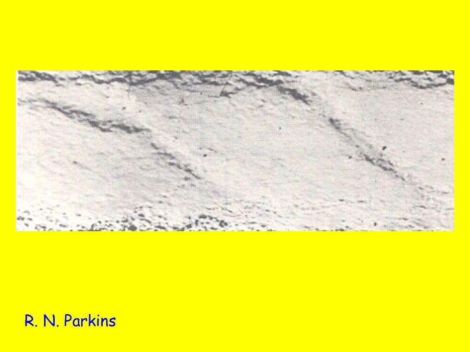 R. N. Parkins