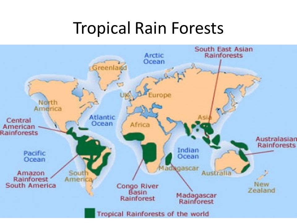 2 Tropical Rain Forests