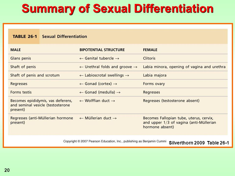 Summary of Sexual Differentiation