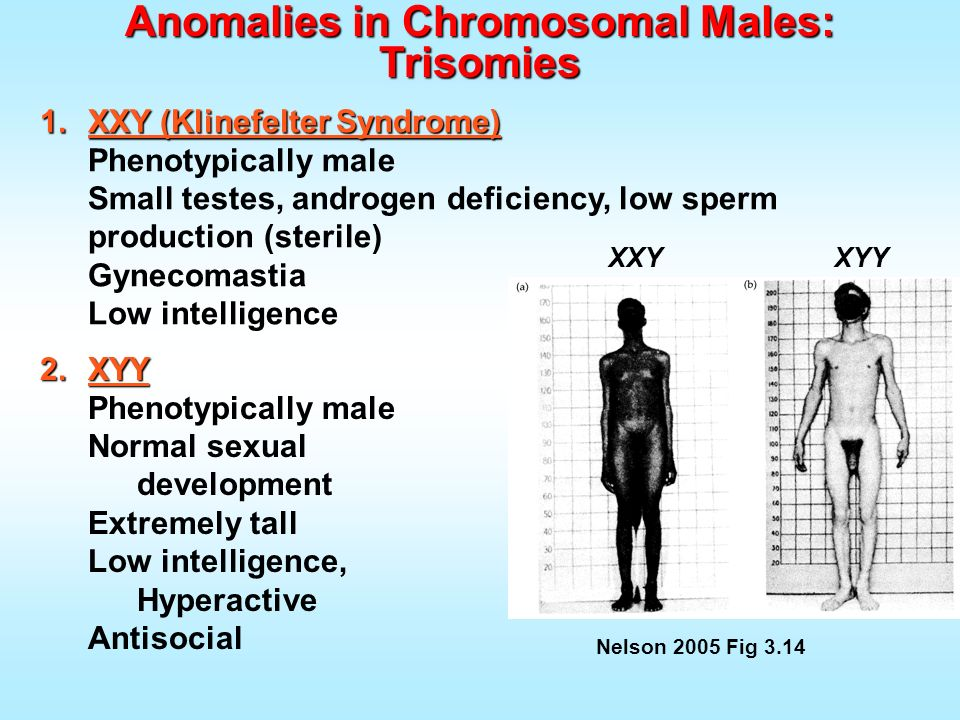 Anomalies in Chromosomal Males: