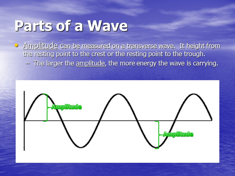 Parts of a Wave Amplitude can be measured on a transverse wave. It height from the resting point to the crest or the resting point to the trough.