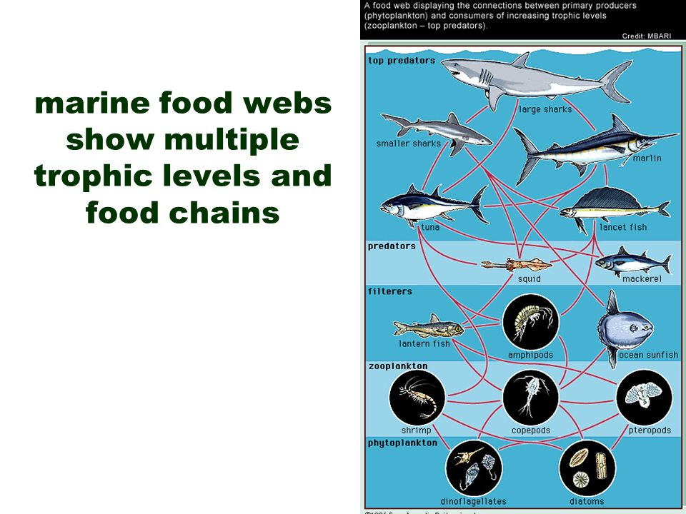 download synthetic pyrethroids occurrence and behavior in aquatic environments