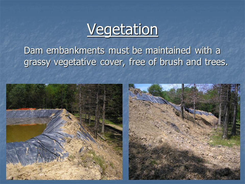 Vegetation Dam embankments must be maintained with a grassy vegetative cover, free of brush and trees.