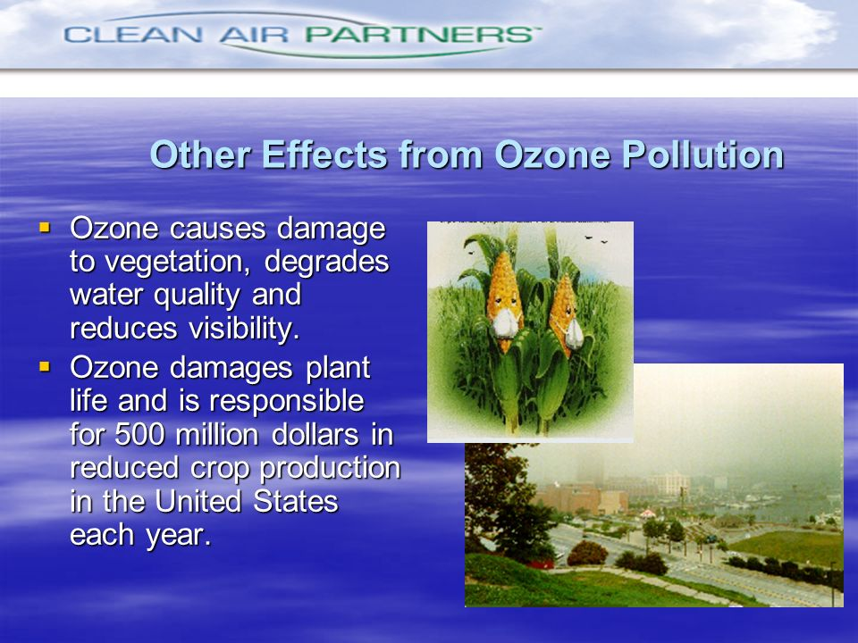 Other Effects from Ozone Pollution