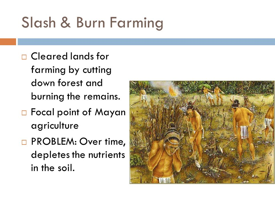 mayan agriculture Mayan farming: shifting agriculture archeologists thought for decades that maya people used slash and burn agriculture, a farming method where trees and other plants.
