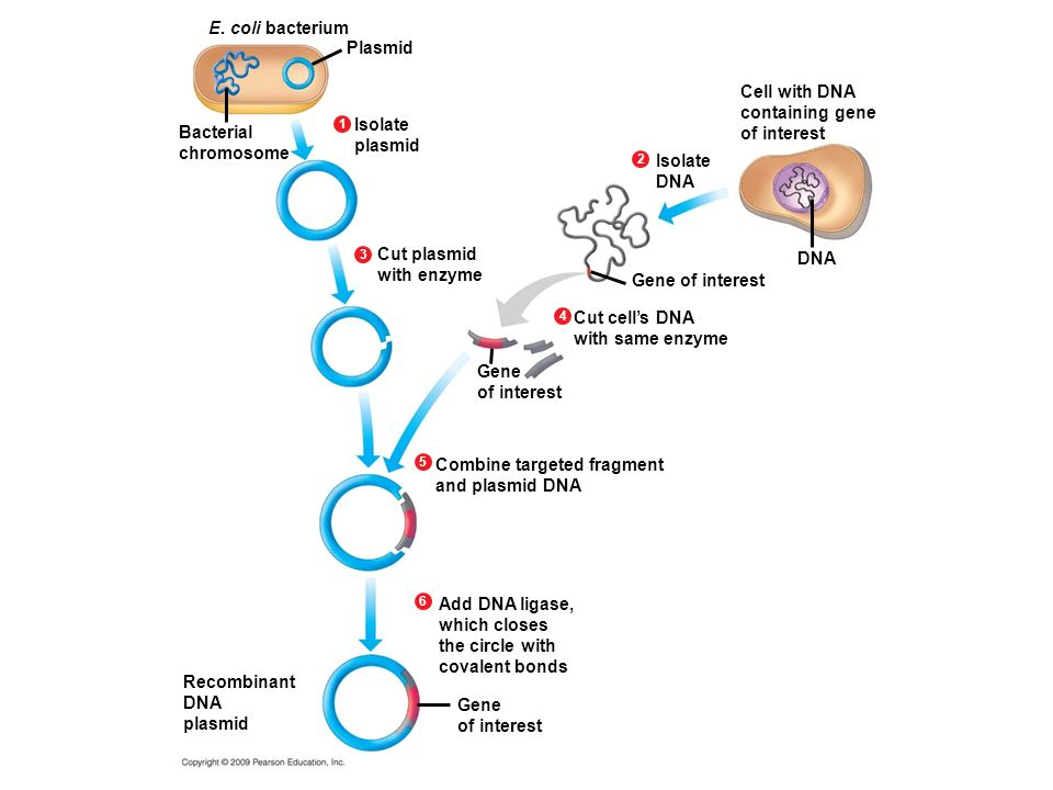 Combine targeted fragment and plasmid DNA